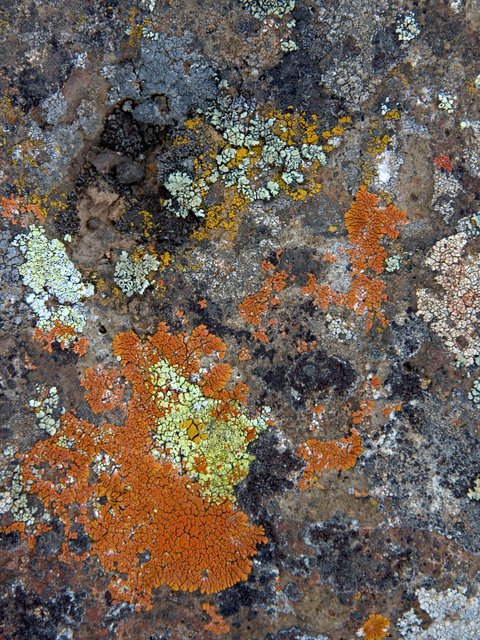 Painted Lava