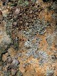 Lichen Light