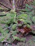 Moss Hide