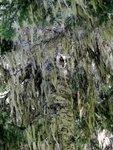 Cascade Ghost