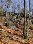 Rocky Trees