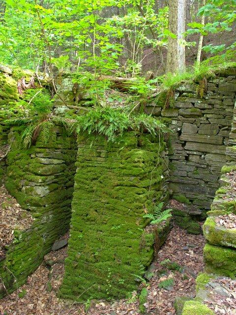 Mill Moss