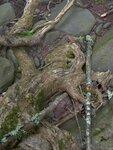 Root Reach
