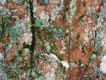 Beech Rock